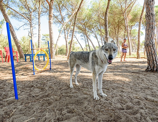 Villaggio Orizzonte dog friendly toscana