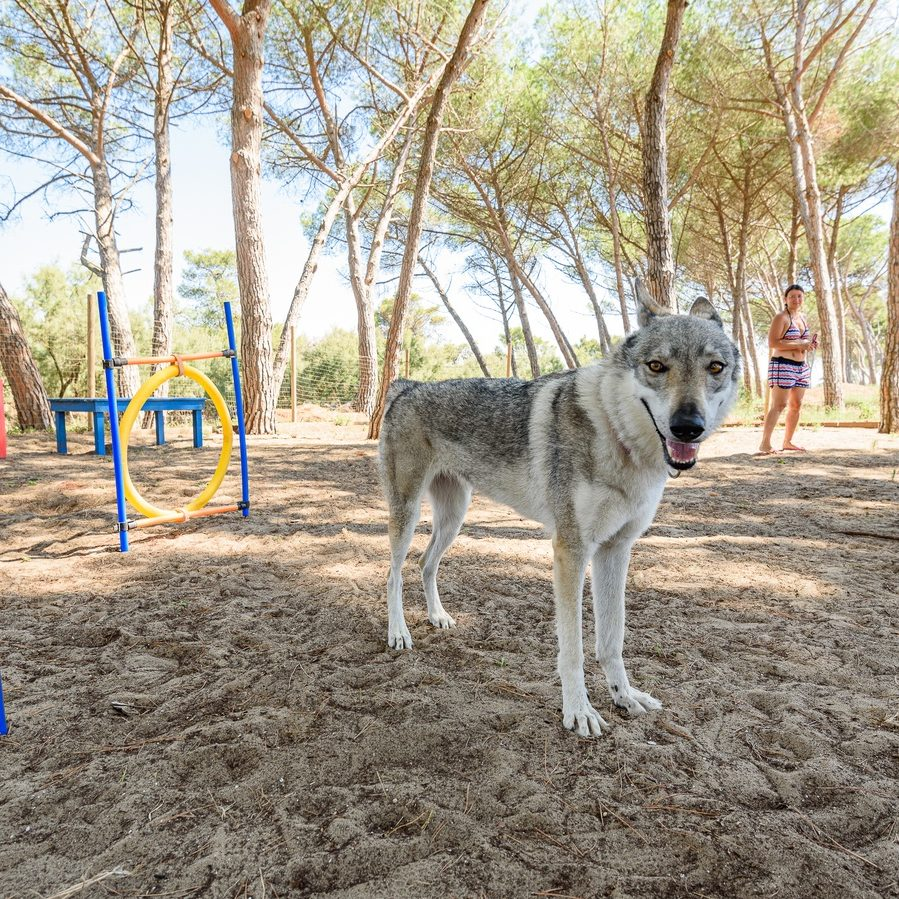 Villaggio Dog Friendly