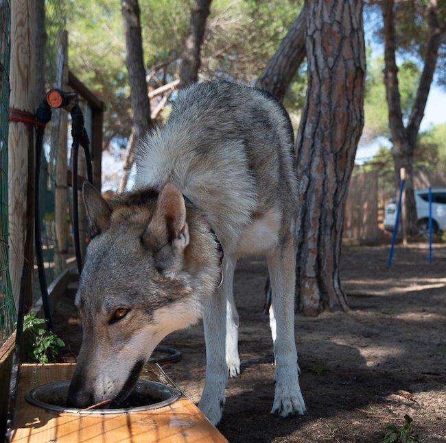 Villaggio Orizzonte dog friendly