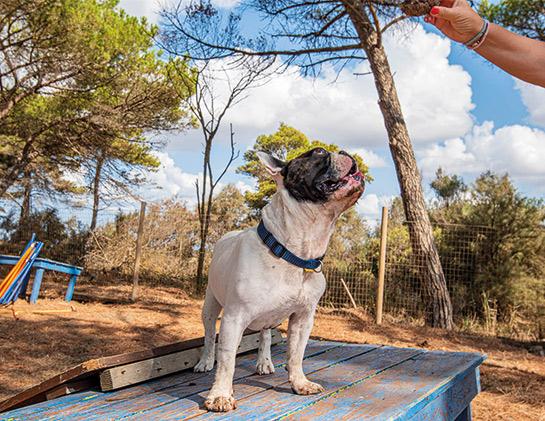 Villaggio Orizzonte dog friendly toscana